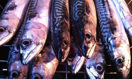 Grillet makrel